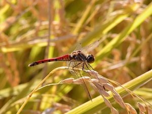The dragonfly is there whether you see it or not