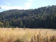 Mt. Palomar State Park peaceful meadow