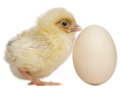 You no longer need to wonder whether the chicken or the egg came first. They are interchangeable. An egg is a disassembled baby bird just waiting to form into a miraculous being.