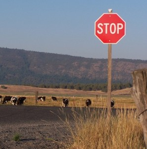 This picture says it all. Cattle grazing is highly destructive to life on earth. Just stop eating meat.