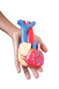 By lowering blood pressure, the nitric oxide released when sun hits skin helps protect your heart