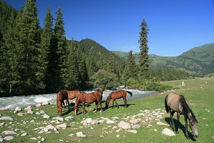 I had never heard of the Karakol Valley, Kyrgyzstan until Wendy sent me this photo. So peaceful!