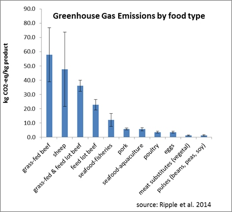 Grass-fed cattle have the biggest impact in raising the level of greenhouse gases, accelerating climate change