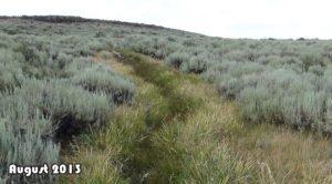 Same scene, after cattle were removed. Vegetation rebounded!
