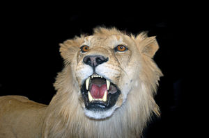 Look in the mirror. If your teeth don't look like this, you are not a natural carnivore.