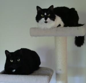 Boojum and Sweetpea look innocent, but they are plotting their next move to disrupt Dave's writing