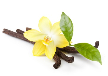 The vanilla flower is a gorgeous orchid, shown with the dried seed pods used for pure, natural vanilla spice