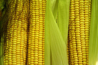 Corn is another excellent whole grain food that can be enjoyed in many different ways