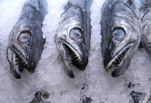 Despite the acknowledged fact that all fish contain mercury, the Guidelines advise you to chow down on this potent neurotoxin, despite the fact that plants make and provide safe omega-3s without mercury