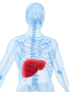 Your liver is a large and complex organ with a multitude of tasks.