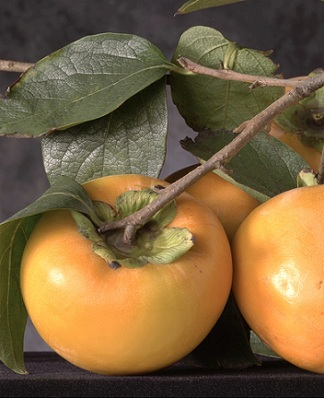 Persimmons are a lovely orange fruit that is crammed with carotenoids that your body can use as an antioxidant, or make into vitamin A if you need it